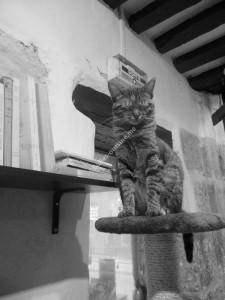 Café des chats A 2