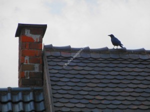Chat & corbeau B 2